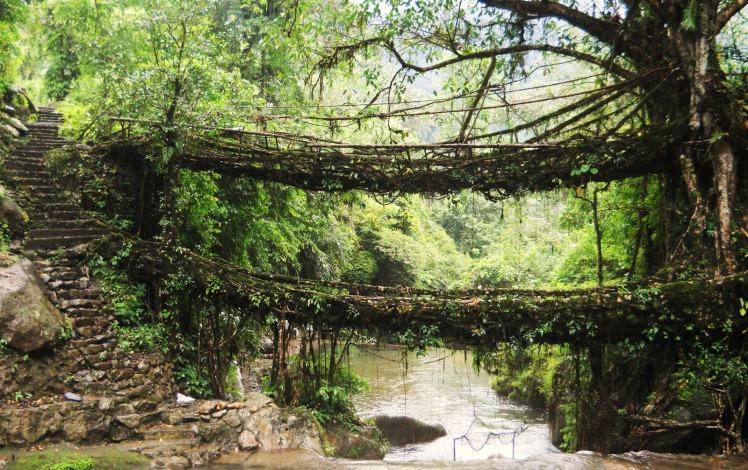 1 Umshiang double decker root bridge