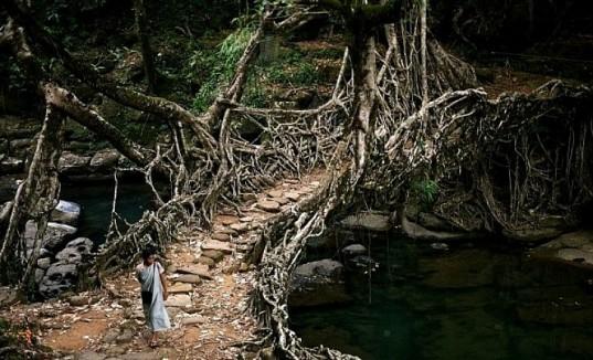 living-root-bridge-cherrapunji-537x326
