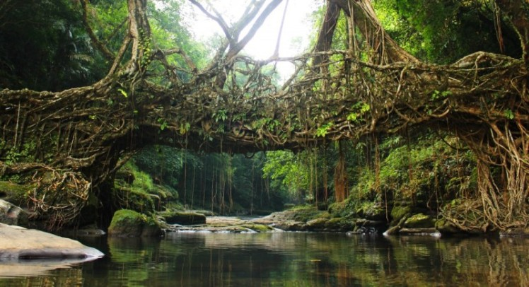Living-Root-Bridges-e1420201521813